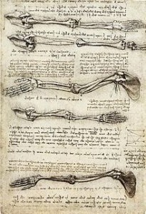 Anatomical study of the arm, (c. 1510)