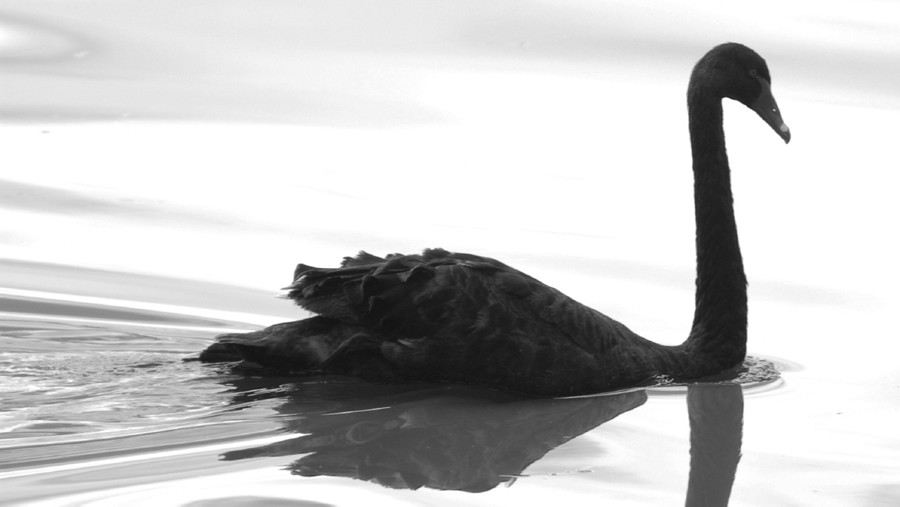 Trump s supporters already believe that America is in the throes of  disaster   his rise is only understandable as a reaction to that belief. Trump Rides the Black Swan   The Stream