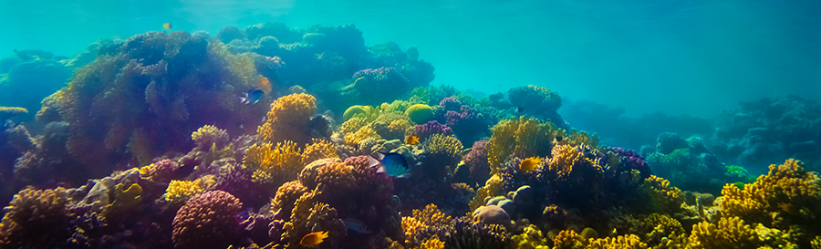 Coral Reef Colorful Beauty - 900