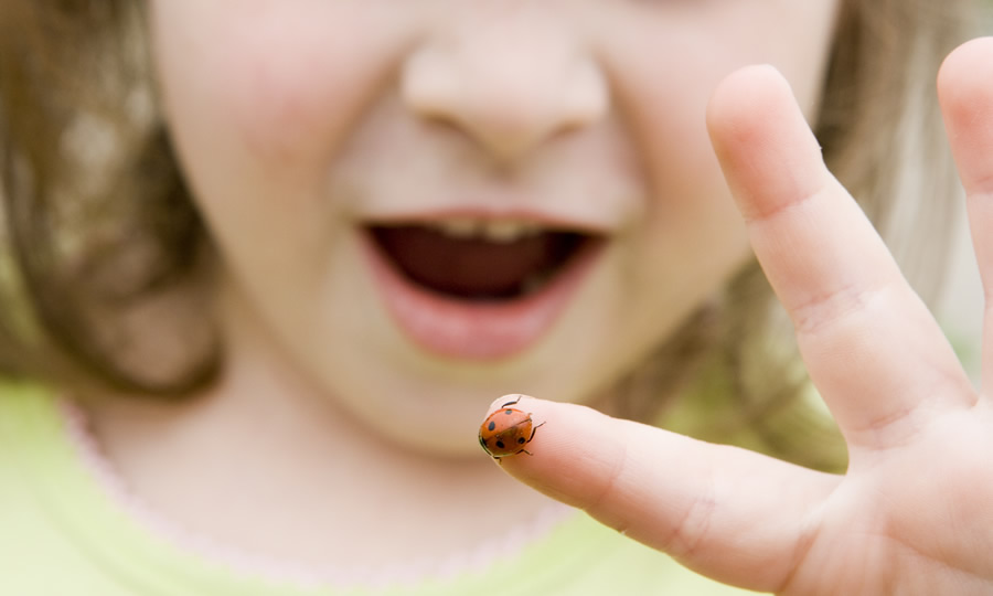 Girl Playing with Ladybug, Insect, Exploring, Adventure, Childhood, Kid, Wonder