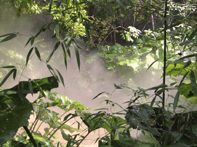 Jurassic Period Hot Steamy Jungle