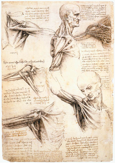 Leonardo da Vinci Anatomical studies - 400