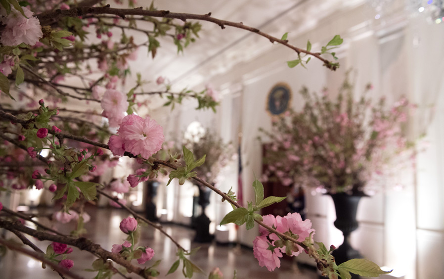 The Cross Hall decorated with Cherry Blossoms for a State Dinner in honor of France at the White House.