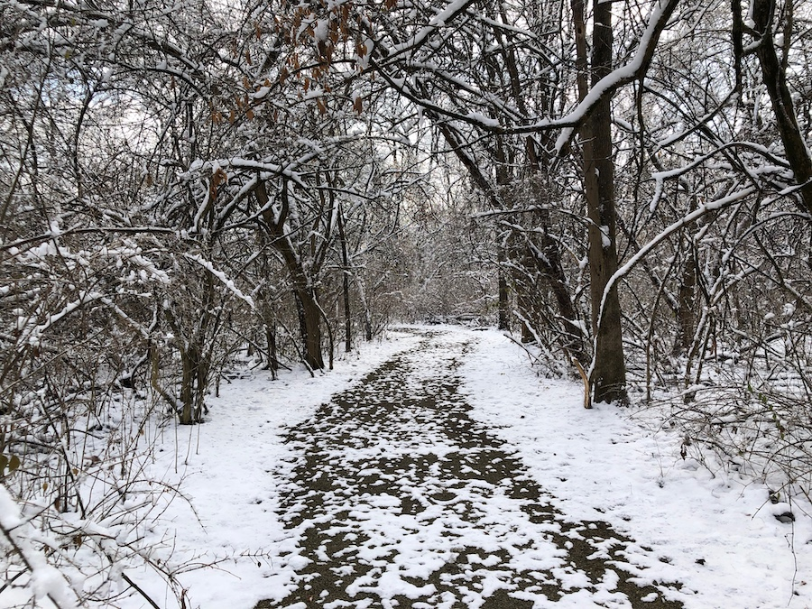 Peaceful snowy woods near Gilson home